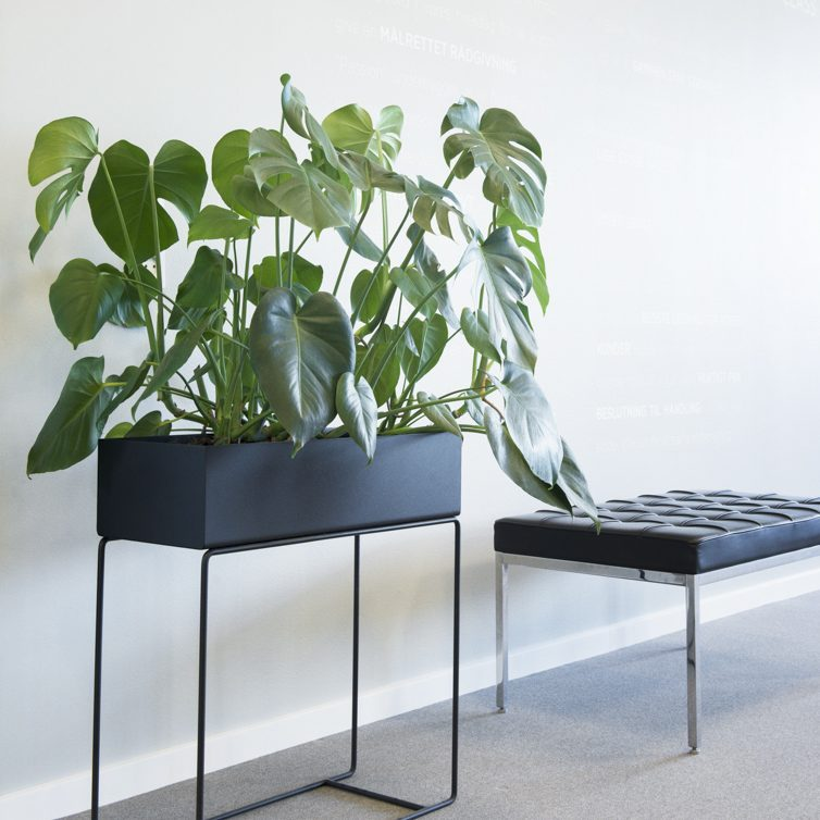 Plant Box Pakken med Monstera